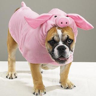 Cão vestido de porco