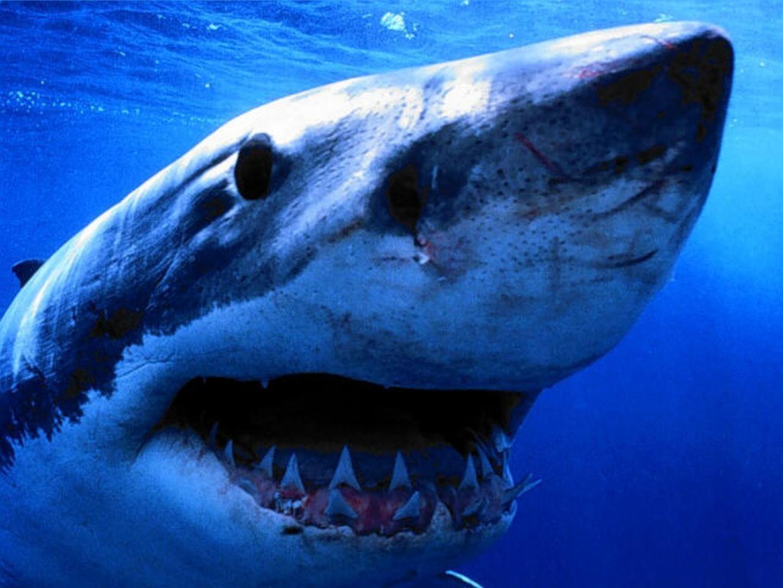 Fish R: Shark Fish Whale Shark Size