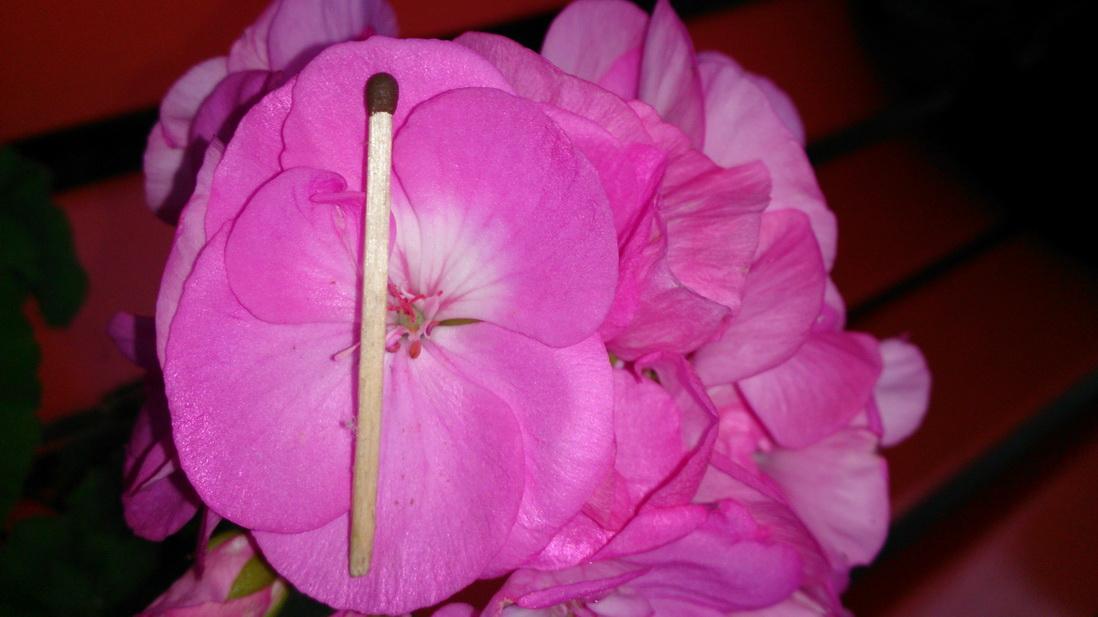 Где сажают цветы в игре матрешка