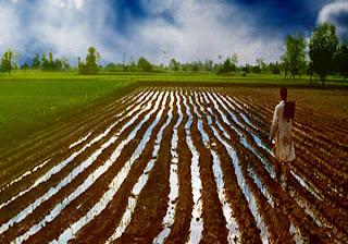 Achèvement des préparatifs de la culture d'un million et (350) mille hectares dans l'île de la nouvelle saison