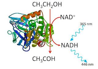 http://4.bp.blogspot.com/-nMOsWfIyXis/T80i2tDLsfI/AAAAAAAAAIc/tNEOd4HlLJM/s1600/Enzymatic+SDME.jpg