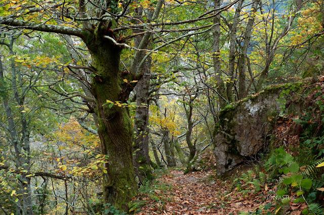 chestnut forest Proaza