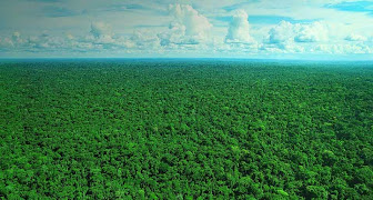 Amazon - Rainforest