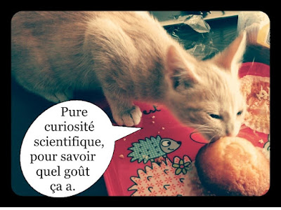 Chaton roux mignon mange une madeleine