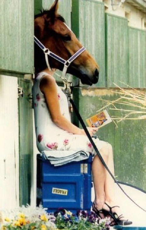 horse woman book funny photo