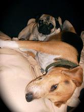 Meine zwei süßen Hundis beim Kuscheln