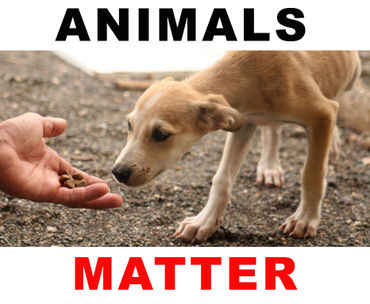 Global Campaign > MAKE THE UNIVERSAL DECLARATION ON ANIMAL WELFARE A REALITY!