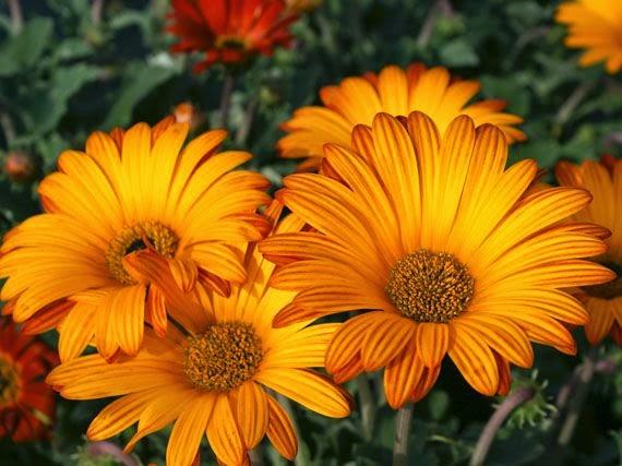 Garden sopelana mundo verde jardinarium planta de la semana for Como se llaman las plantas ornamentales