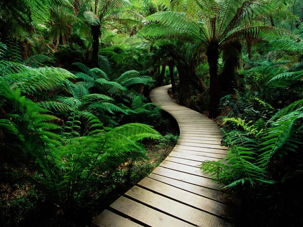 http://4.bp.blogspot.com/-nNrth5Bvz6U/Tl8vKX5_K_I/AAAAAAAADZk/0W6mNDzEZQw/s1600/nature+wallpapers+%25287%2529.jpg