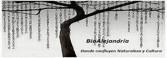 BioAlejandría
