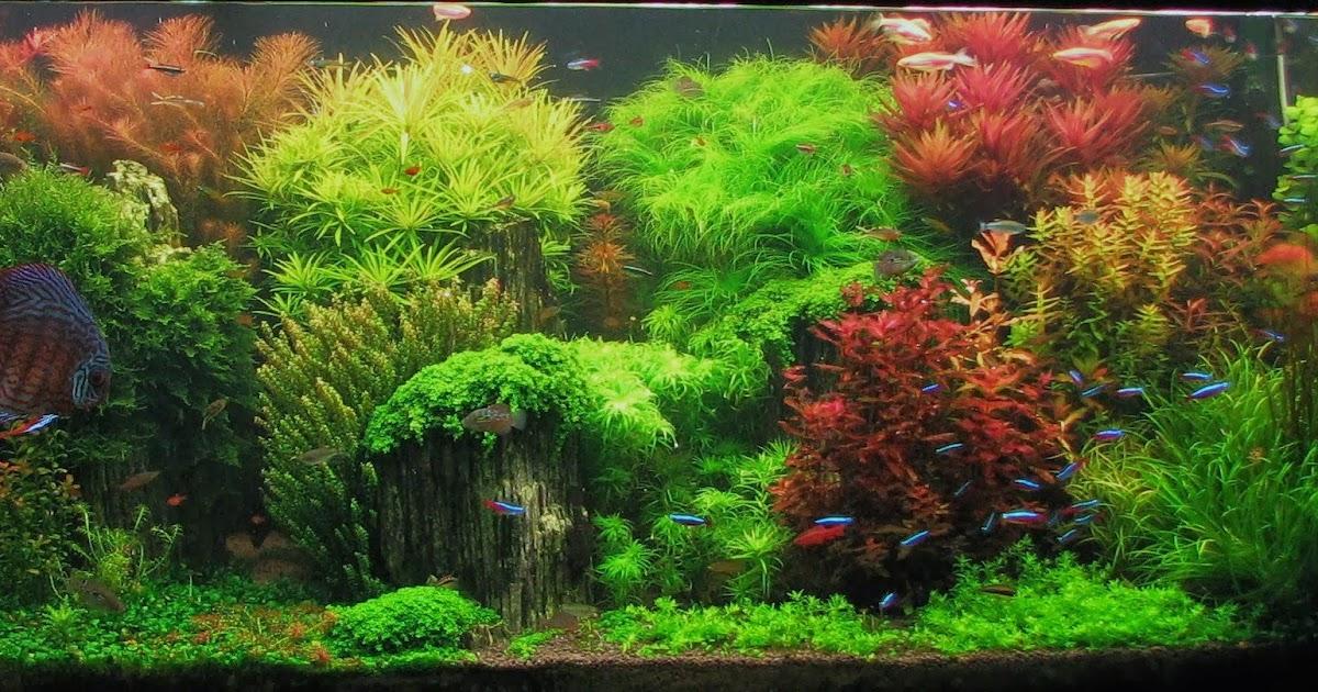 aquascape indonesia: mengenal aquascape