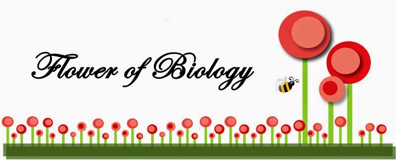 Flower Of Biology
