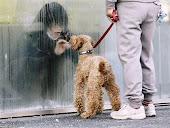 放射能が検出され隔離された娘に話しかけようとしている母親と犬
