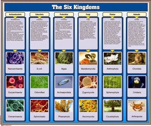 Chapter 18 Classification – The Six Kingdoms Worksheet