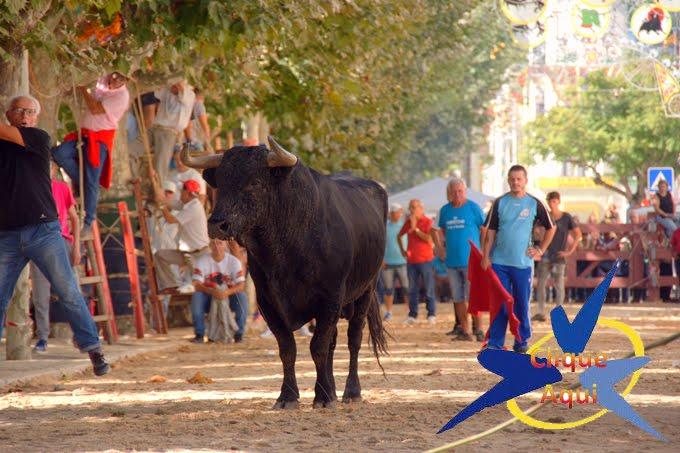 FESTAS DA MOITA 2016- ENTRADA DE TOIROS