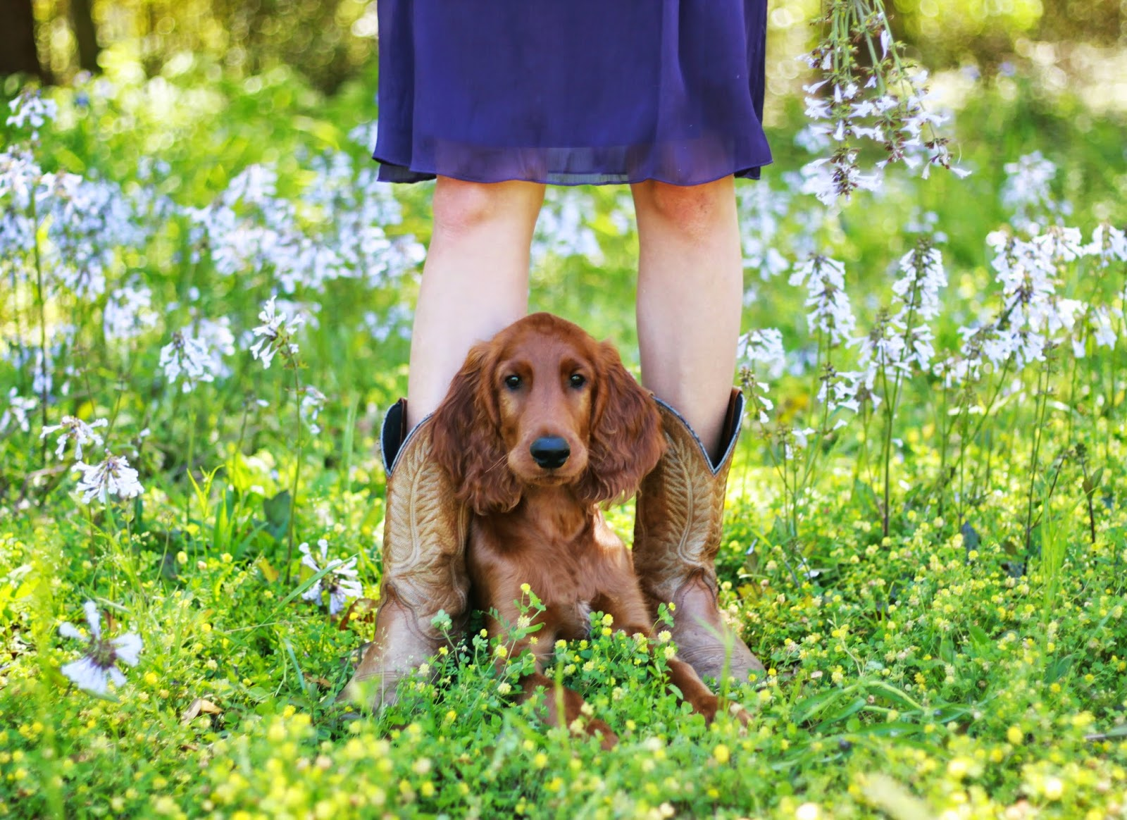 Pace, FL portrait photography Pensacola Senior girl puppy Irish Setter
