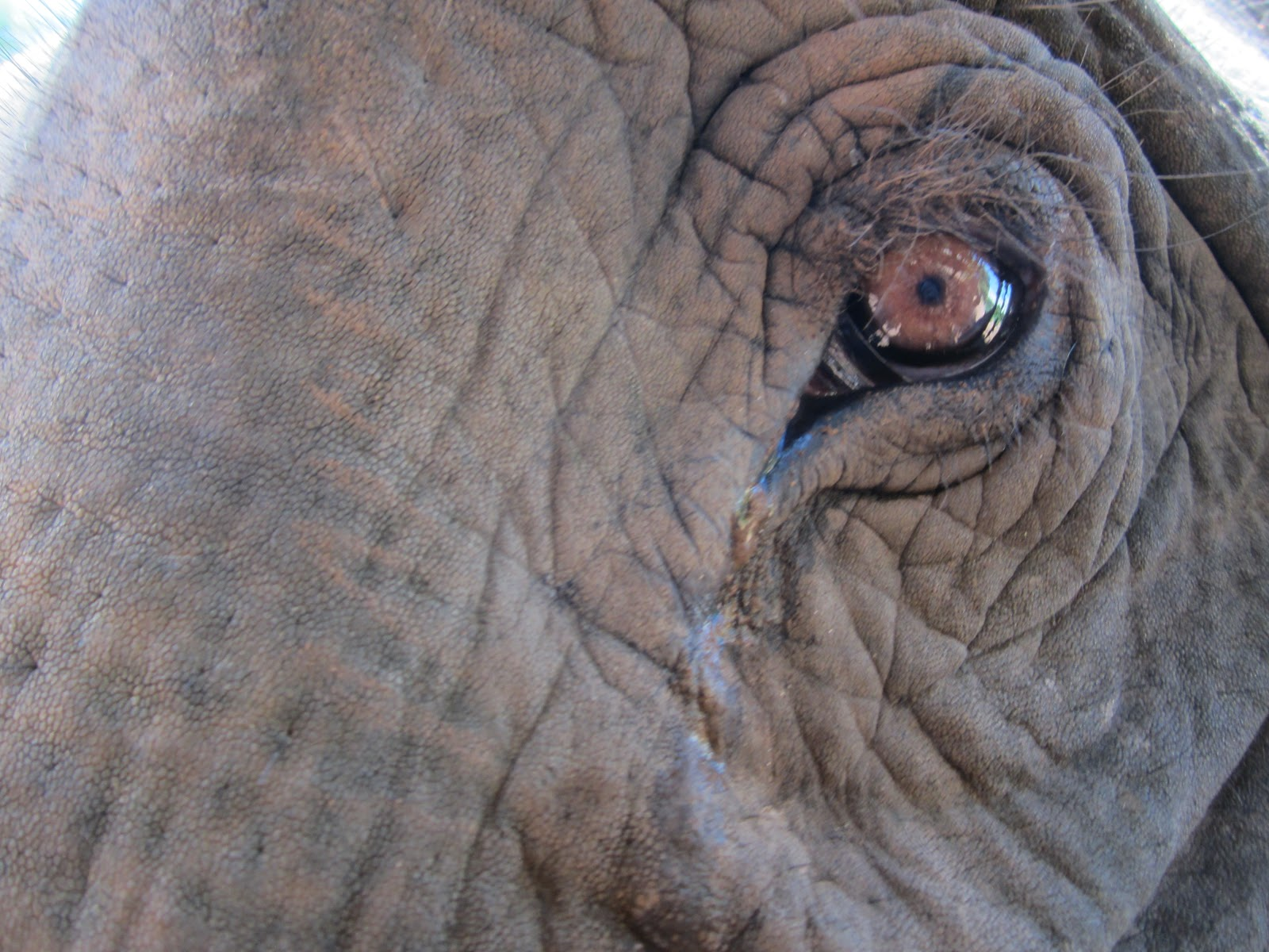 think elephants international seeing red why elephants might