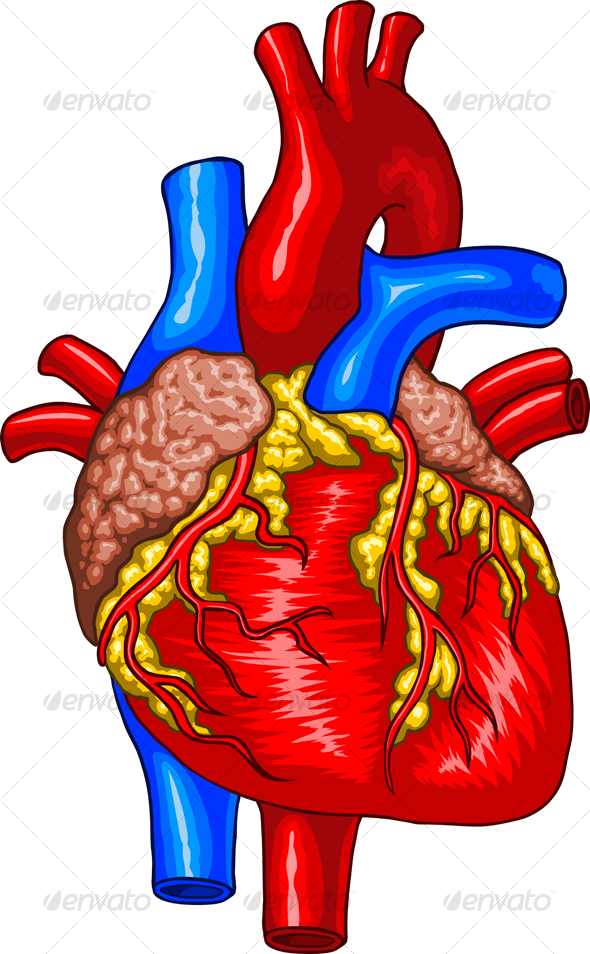 free clip art human heart - photo #47