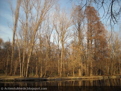 Soarele oglindindu-se în copaci...