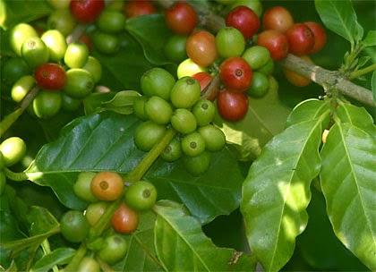 Fényüzér ételreceptek - szecsuáni bors