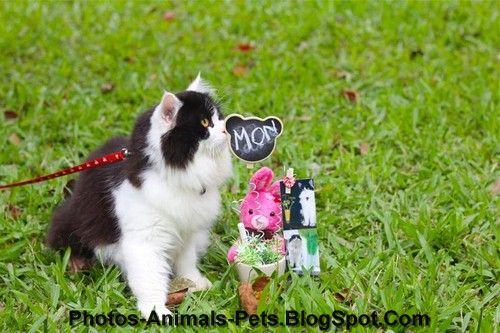 http://4.bp.blogspot.com/-nPhLgU5j9to/TphiMyBWg5I/AAAAAAAAB_o/TMilFADYTPA/s1600/Cute%2Bcat_0601.jpg