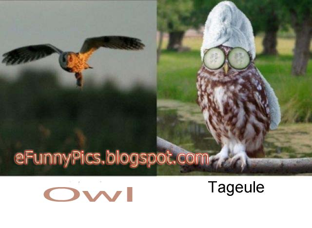 Owls and Times of The Day