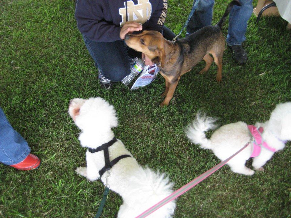 Bichon Love Pick Nose Dog Food Money