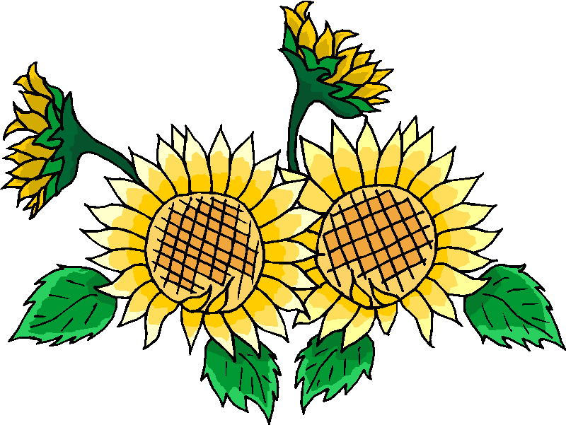 Beautiful Sunflower Free Clipart