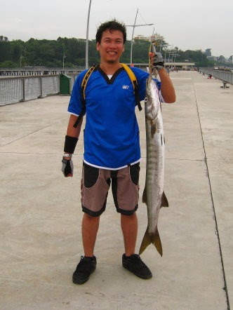 Yellowtail Barracuda [Sphyraena Flavicauda] also know as Saw Kun 沙君 [Hokkien] or Ikan Kacang [malay] weighing 3kg plus caught by Ah Ling at Woodland Jetty on 8th Jul 2014 using live Five-spot Herring or Assam fish (local), Selangat (malay) on float.
