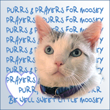 Purrs and Prayers for Moosey