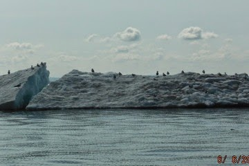 Seagulls cooled down on an iceberg floating in Lake Superior on June 6, 2014.