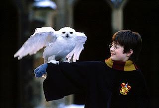 Harry y Hedwig