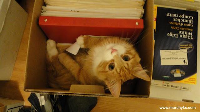 Cat Secretary