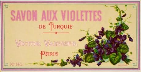 Violettes de Turquie