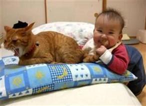 sabırlı-kedi-japon-bebek-kedinin-kuyruğunu-ısırıyor-izle