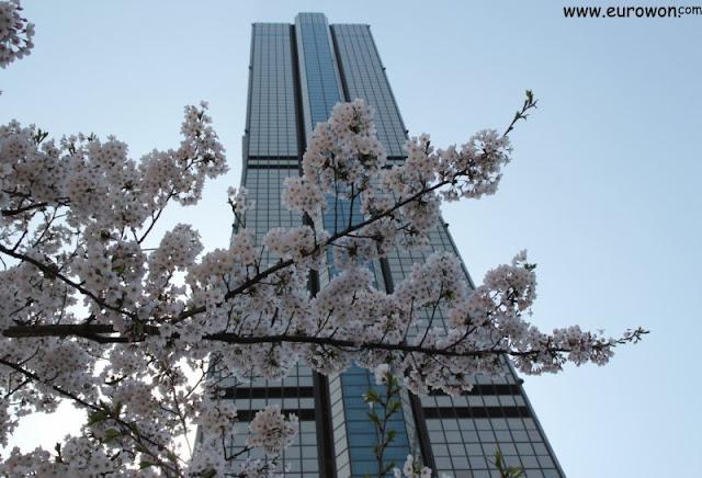 Cerezos florecidos delante del Edificio 63 de Seúl