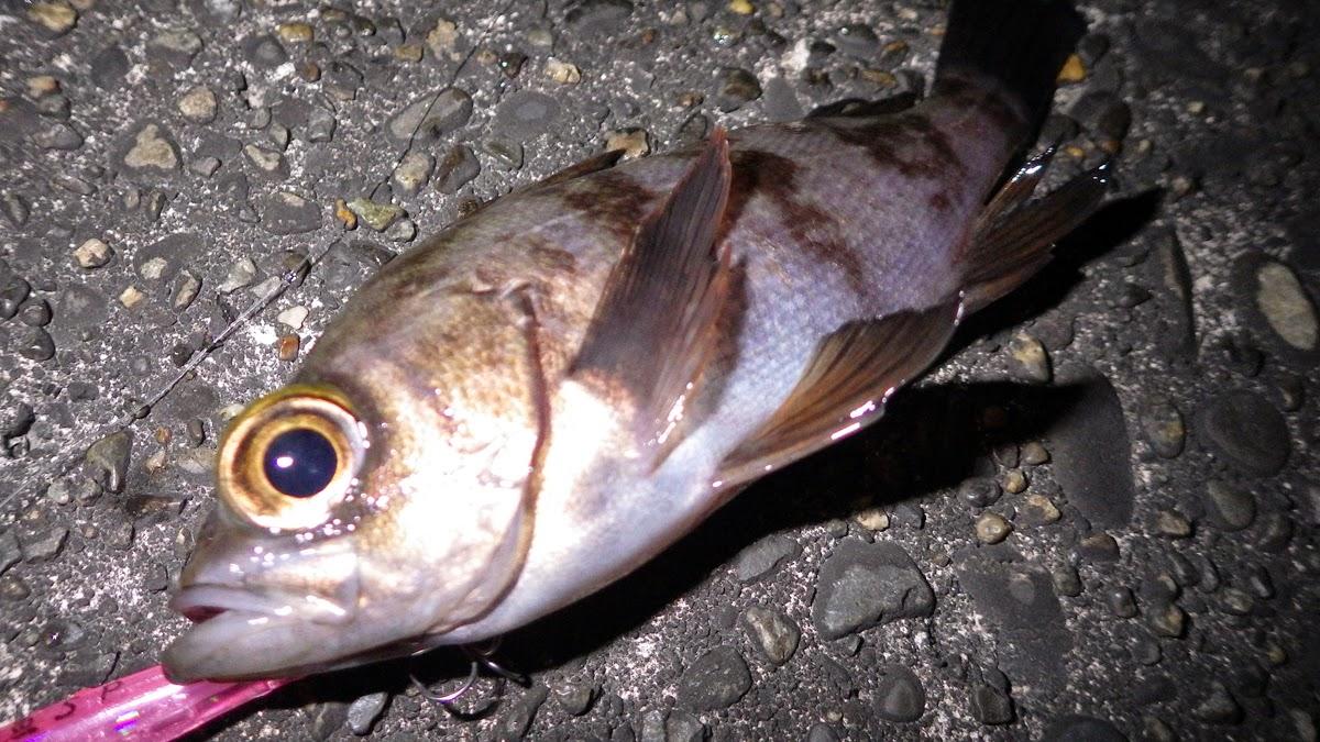 メバル 湾奥 Nyoro Nyoro 6cm