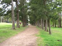 camino entre arboles prado montevideo uruguay deporte paisaje