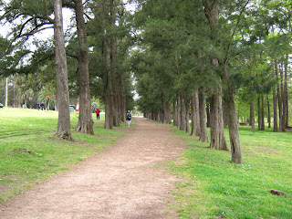 the tunnel of trees again. Joggin sport and run.
