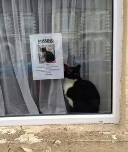 Missing Cat humour