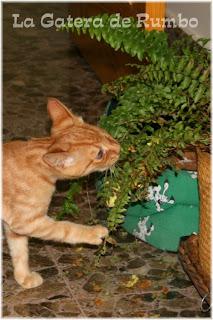 la gatera de rumbo plantas contra gatos