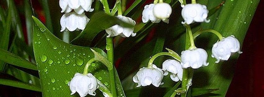 Une super couverture facebook muguet