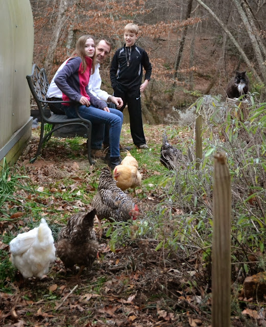 backyard chickens, kitchen garden, http://growingdays.blogspot.com
