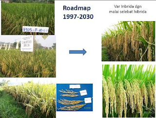 Roadmap Penelitian Padi IPB