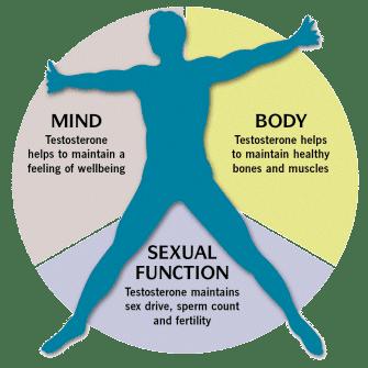 Tonex - Fungsi hormon testosterone