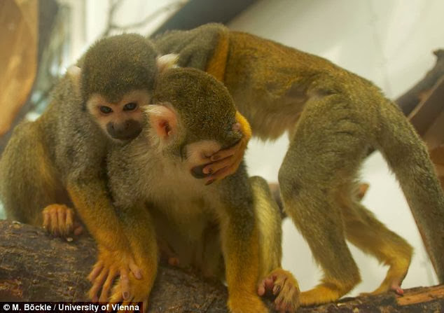 Monkey-Human Ancestors Got Music 30 Million Years Ago