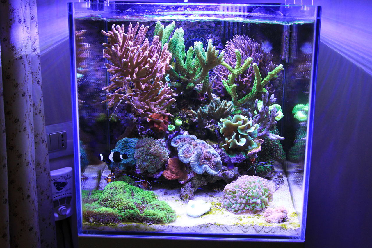 Giordy s reef nuova sezione per il nanoforum