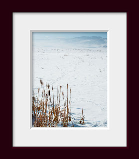 wide open snow covered prairie with a stand of winter cattails and a view of distant mountains
