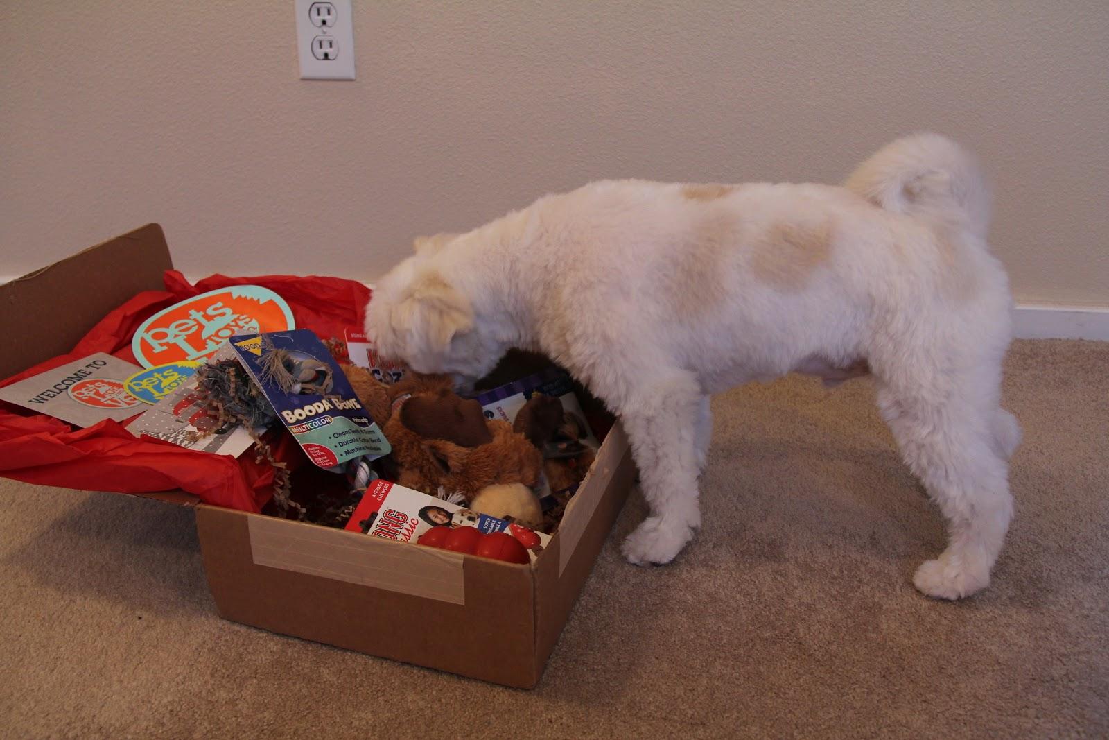 DSK Steph!: Dog Blog: PetsLoveToys December Box!