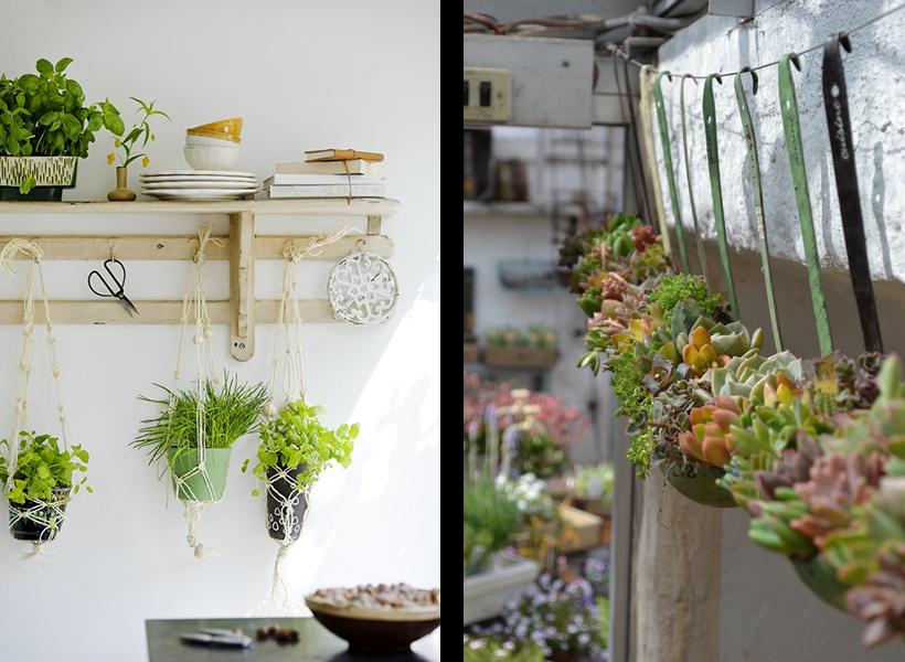 etagere murale plante
